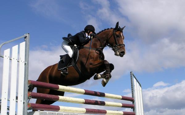 Temporada Oficial Festival de Cavalos Novos e CIA  Haras Cooper    I Etapa