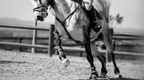 Novidade | Conheça o  Projeto de Formação de Cavalos Novos da FPH e ABCCH