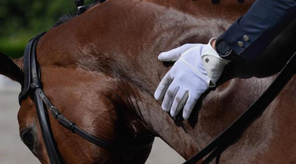 Palestra - 02/02   O que é bom para o seu cavalo?
