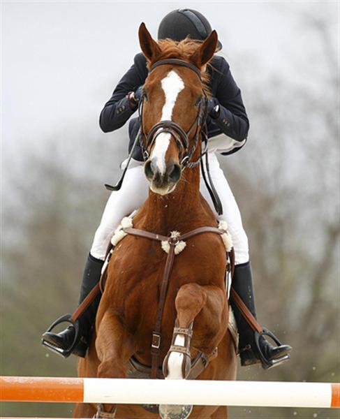 Campeonato Paulista de Hipismo do Interior: Evento reúne as melhores duplas de cavalos e condutores do estado para um show de talento.